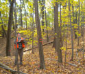 Photo of scientist Kevin Dodds assessing a beetle-laden tree near Worcester, Mass.