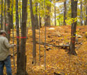 Photo of scientist Nathan Siegert measuring an infested tree in a town abutting Worcester, Mass.