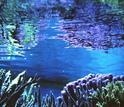 vegetation under water