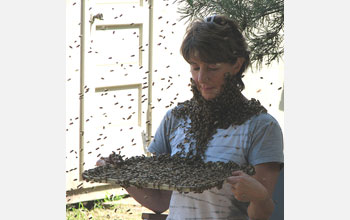 Image of Marla Spivak holding a try full of bees that have crawled on her neck and face.