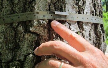 tree diameter measurement