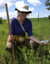 Researcher Sara Zufan measuring an Echinacea plant in an experimental garden plot