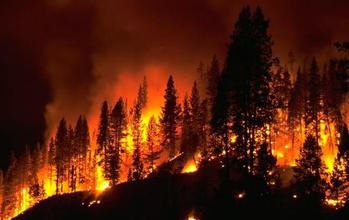 Forest burning because of a wild fire