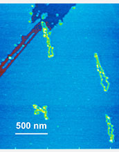 AFM images showing two yellow molecules on a blue mica surface.