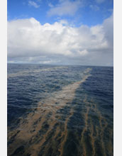 Photo showing surface accumulation of the nitrogen-fixing microbe Trichodesmium in Pacific Ocean.