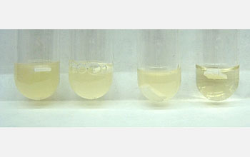 Cloudy liquids show bacterial growth; tube with clear liquid contains penicillin-coated surface.