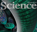Images of the cover of the December 19, 2008 issue of <em>Science</em> magazine