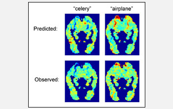 Images from computer-predicted and actual functional magnetic resonance imaging scans.