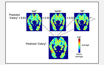 Predicted and actual fMRI scans of the brain focusing on brain activity associated with words.