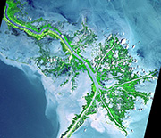 Satellite view of the Mississippi Delta before hurricanes Katrina and Rita destroyed a large part of it in 2005.