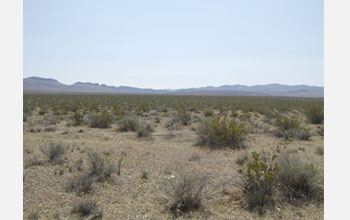 Photo of shrubs in the Mojave Desert.