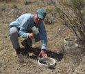 Photo of Carrie McCalley installing soil collars used to measure nitrogen flux in desert soils.
