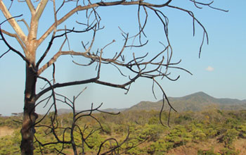 Trees and open land in the Rukwa Rift Basin of southwestern Tanzania.