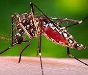 The link between tourism and mosquito-borne diseases is the subject of a new CNH grant.
