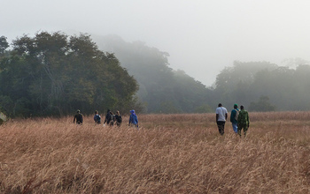 group walking through a grass field in Gabon