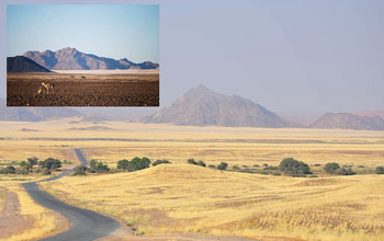 Photo of vegetation covering stony desert of Namibia and inset showing desert without plants.