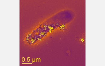 "A bacteria cell living in a no-oxygen environment ""breathes"" using mineral nanoparticles."