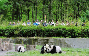 Photo of tourists watching pandas in Wolong Nature Reserve, May 2005.