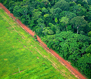 Contrast between forest and land cleared for agricultural use near Rio Branco, Acre, Brazil.