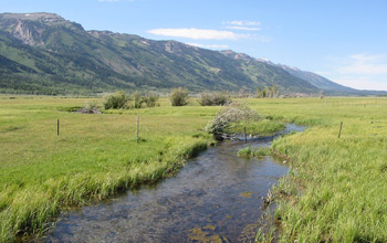 Photo of a stream flowing through a pasture at the foot of the Grand Teton Mountains in Wyoming.