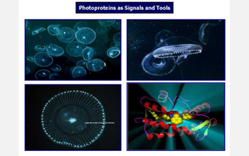 Photos and illustration of bioluminescence in a variety of marine organisms.