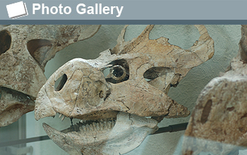 Photo of dinosaur skull and the words Photo Gallery.