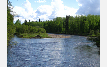 Photo of the Bonanza Creek Long Term Ecological Research (LTER) in Fairbanks, Alaska.