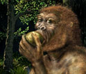 Illustration of Paranthropus boisei, also called Nutcracker Man, eating fruit.