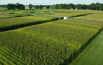View of a Kellogg Biological Station LTER experiment to test how crops respond to nitrogen.