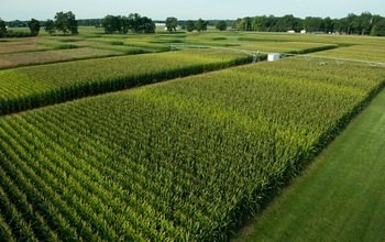 Scientists at NSF's Kellogg Biological Station LTER site test how crops respond to nitrogen.
