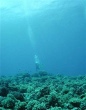 a diver swimming above a coral reef.
