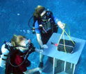 Image of two researchers in scuba gear obtaining information about Mo'orea's coral reefs.