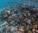 Image of coral reef that rings the island of M'oorea.