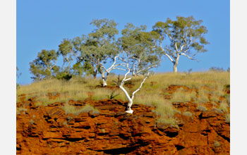 Photo of Australia's red-weathered hills.