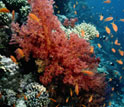 Image of a coral reef and fish.