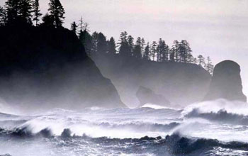 Photo of waves and a rocky, tree covered coast.