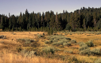 old lake bed in Yellowstone covered with grass and willows growing along its wet edges.