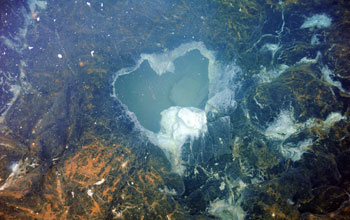 Photo of Axial Seamount subshowing showing vent surrounded with bacterial mats.