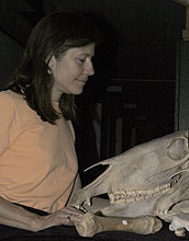 Woman gazing at fossilized skull.