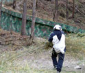 Man wearing panda suit walking toward a baby panda in a tree