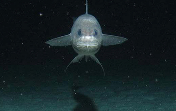 into the abyss scientists explore one of earth s deepest ocean