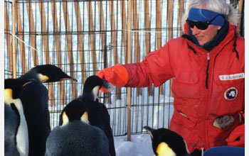 Photo of Jerry Kooyman feeding penguins