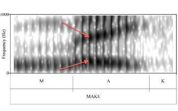graphic representation showing multiple bars marking the vocal progression of a speaker
