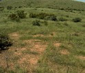 Screenshot from a pheno cam showing Kendall Grassland in summer
