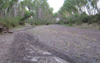 A dry stretch of the San Pedro River.