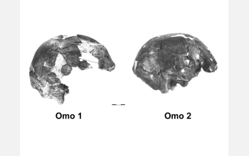 Skulls from the Omo River in Ethiopia.
