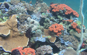 Corals around Palau's Rock Islands.