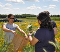 Three students collecting plant biomass samples in the field