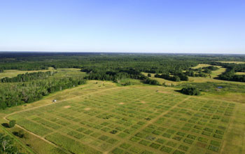 Photo of prairies and forests in the NSF Cedar Creek LTER site.