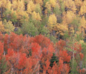 Photo of a forest of deciduous trees.